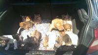 Tierschutz-Stammtisch