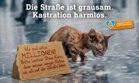 Kastration verhindert neues Katzenelend