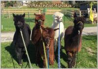 Ausflug zu den Wolfachtal Alpakas und in den Wildpark Ortenburg