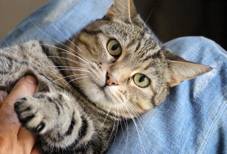 Katzenstreichler/innen gesucht