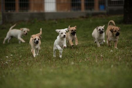 Abendvorträge für Hundehalter und Hundeinteressenten