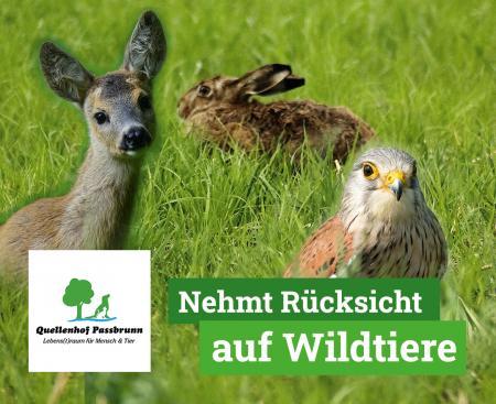 Bitte Rücksicht auf die Wildtiere nehmen