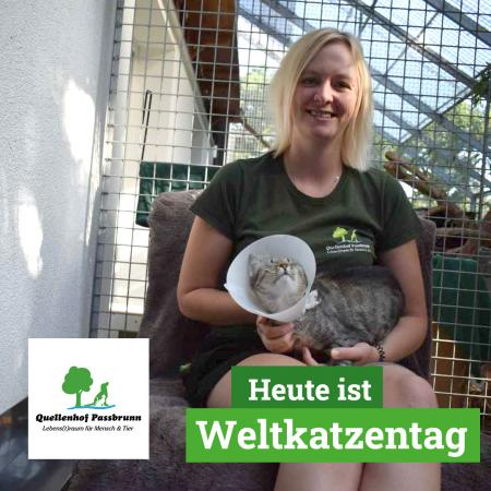 Weltkatzentag 2020 im Quellenhof Passbrunn