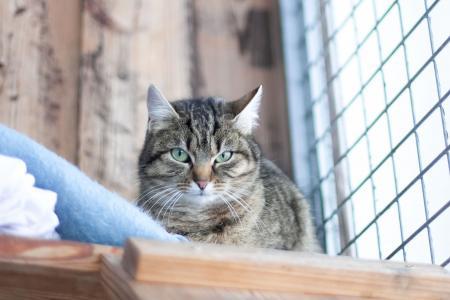 Kuschelige Rückzugsmöglichkeiten für unsere scheuen Katzen